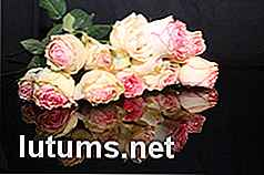 Expat dubai Dating-Website